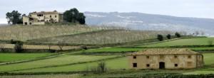 La Font de la Figuera, Moixent y Fontanares, estas tres poblaciones forman un triangulo conocido como la Toscana valenciana, un paisaje excepcional, con tierras idóneas para viñedos.